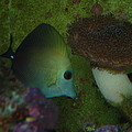 Tropical Fish And Coral by Robert Floyd