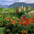 Usa, Colorado, Crested Butte by Jaynes Gallery