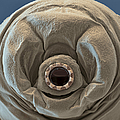Water Bear by Eye of Science and Science Source