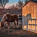 7056 Horse Shadow by Deidre Elzer-Lento