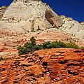 717p Zion National Park by NightVisions