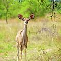 African Mammals by Shannon Benson