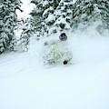 A Man Skiing In Powder Near South Lake by Corey Rich