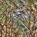 Plantation Allee Of Oaks by Dale Powell
