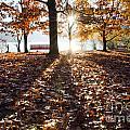 Autumn Trees by Mats Silvan