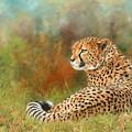 Cheetah by David Stribbling
