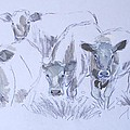 Cows by Mike Jory