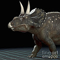 Dinosaur Diceratops by Science Picture Co