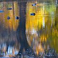 8 Ducks On Pond by Deprise Brescia