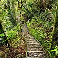 Forest Trail by Les Cunliffe
