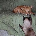 Foxy And Ninja by Robert Floyd