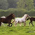 Horses On The Meadow by Angel Ciesniarska