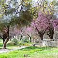 Olympia Greece by Paul Sandilands