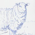 Sheep by Mike Jory
