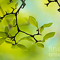 Spring Green by Nailia Schwarz