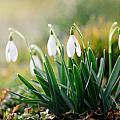 Spring by Steffen Gierok