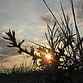 Sunshine On Raven Beach by Stefan Batog