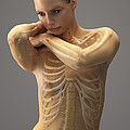 The Skeletal System Female by Science Picture Co