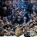 Underwater Life by Michal Bednarek