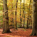 Vibrant Autumn Fall Forest Landscape Image by Matthew Gibson