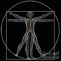 Vitruvian Man by Science Picture Co