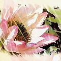Water Lily by Joyce Baldassarre