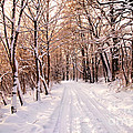 Winter White Forest by Michal Bednarek