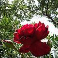 Flower by Tinjoe Mbugus