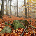 In The Autumn Forest by Pavel Jankasek