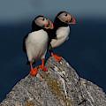 Atlantic Puffins Fratercula Arctica by Jose Azel