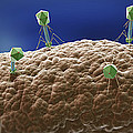 Bacteriophages by Science Picture Co