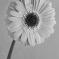 Black And White Beauty by George Atsametakis