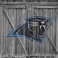 Carolina Panthers by Joe Hamilton