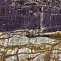 Devonian Slates by Dr Keith Wheeler