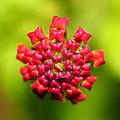 Flower by Nick LaRocque
