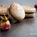 French Macaroons by Kati Finell