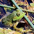 Frog by Rick Rauzi