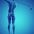 Golf Player by Sciepro/science Photo Library