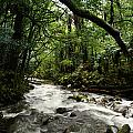 Jungle Stream by Les Cunliffe