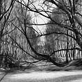 9 Black And White Artistic Painterly Icy Entrance Blocked By Braches by Leif Sohlman