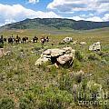 Rock Along The Trail by Tara Lynn