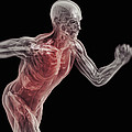 Running Male Figure by Science Picture Co