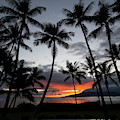 Silhouette Of Palm Trees At Dusk by Panoramic Images
