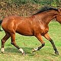 The Bay Horse by Angel Ciesniarska
