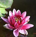 Water Lily by Irina Davis