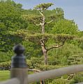 Asian Garden Scene by Patrick  Warneka