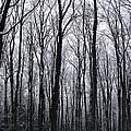 Trees In Winter by Pavel Jankasek