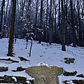 Stone Altar In The Woods by Pavel Jankasek