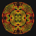 995 - Mandala In Earth Colours   by Irmgard Schoendorf Welch
