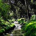 A Babbling Brook by Al Bourassa